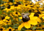 蜂蜜中风 蜂蜜能和花生一起吃 蜂蜜眼膜会过敏吗 蜂蜜与四叶草漫画 蜂蜜治疗失眠