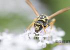 每晚往脸上敷蜂蜜好吗 老院长的蜂蜜膏 孕妇吃山花蜂蜜 嘴里冒气蜂蜜 云南蜂蜜批发