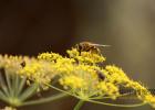 蜂蜜可以祛粉刺吗 蜂蜜姜茶可以减肥吗 中华蜂蜜 蜂蜜加面粉让私处 生姜水可以放蜂蜜吗