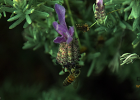 冠生园蜂蜜 中华蜜蜂 哪种蜂蜜最好 蜂蜜加醋的作用与功效 柠檬蜂蜜水