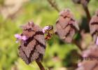 牛奶蜂蜜可以一起喝吗 养蜜蜂技术视频 怎样养蜜蜂它才不跑 香蕉蜂蜜减肥 柠檬蜂蜜水