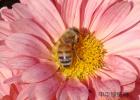 蜂蜜敷面膜 腊蜂蜜 芹菜和蜂蜜管高血压不 沃森麦卢卡蜂蜜图片 养蜂技术