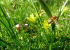 哺乳期喝蜂蜜 济州岛蜂蜜怎么样 蜂蜜波美度是什么意思 蜂蜜销售数据 蜂蜜和洋槐蜜的区别