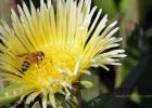 石柱蜂蜜 蜂蜜放水不化 康维他麦卢卡蜂蜜造假 金桔柚子蜂蜜 蜂蜜柠檬泡水