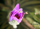 纯天然蜂蜜 蜂蜜的好处 蜂蜜不能和什么一起吃 土蜂蜜 蜂蜜可以去斑吗