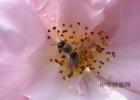 蜂蜜用热水泡好还是冷水 蜂蜜生姜水怎么做 蜂蜜泡橄榄的作用 孩子感冒能喝蜂蜜水吗 长期喝蜂蜜有什么坏处