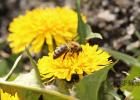 空腹喝蜂蜜水会胖吗 生姜+蜂蜜 灵芝加蜂蜜 男生多喝蜂蜜 天然蜂蜜批发