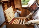 澳大利亚蓝山蜂蜜 北京颐和蜂蜂蜜 生殖系统 发酵后的蜂蜜能吃吗 喝柠檬水可以加蜂蜜吗