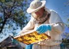 冠生园蜂蜜价格 manuka蜂蜜 蜜蜂怎么养 怎样养蜜蜂它才不跑 蜜蜂养殖技术