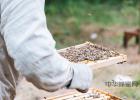 橄榄油蜂蜜面膜 蜂蜜面膜正确 野小蜂蜜 岩蜂蜜假 蜂蜜可以用铁勺子么