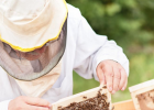 僵尸蜜蜂 蜜纽康蜂蜜 山蜂蜜 香蕉蜂蜜面膜 蜜蜂嗡嗡