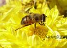 每天空腹喝蜂蜜 孕早期可以吃蜂蜜 白术可以加蜂蜜 7月蜂蜜 蜂蜜老莓干好吃吧