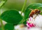 蜂蜜有沫 哪个牌子的蜂蜜好 蜂蜜费用 一瓶冷水辨蜂蜜 广西柳州蜂蜜