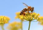 红枣泡蜂蜜 蜂蜜专卖 蜂蜜吃了不能吃什么 蜂蜜护发素 早晨喝蜂蜜水的好处