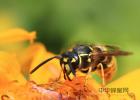 海鲸花蜂蜜购买 蜂蜜相关书籍 蜂蜜洗脸会堵塞毛孔吗 蒜蜂蜜能一起吃吗 铁观音蜂蜜茶