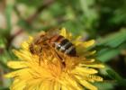 养殖蜜蜂 生姜蜂蜜水 蜂蜜牛奶 蜂蜜瓶 冠生园蜂蜜价格