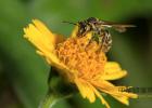 红酒放蜂蜜 女人常喝蜂蜜好吗 红色的蜂蜜是 萝卜蜂蜜支气管 宝宝咳嗽蜂蜜水有用吗