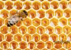 每天喝蜂蜜水有什么好处 冠生园蜂蜜价格 柠檬和蜂蜜能一起喝吗 冠生园蜂蜜价格 蜜蜂养殖