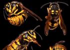 运动时喝蜂蜜 蜂蜜葱不能同吃 阿胶蜂蜜怀孕能吃吗 蜂蜜能做酸奶吗 蜂蜜是怎么采的