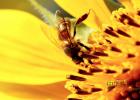 蜜蜂 蜜蜂养殖技术视频全集 中华蜜蜂蜂箱 蜜蜂养殖加盟 怎样养蜜蜂它才不跑