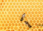 蜂蜜白癜风 驻颜膏 玫瑰蜂蜜 早上一杯蜂蜜水能减肥吗 Honey