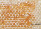 青核桃泡蜂蜜 土蜂蜜起泡沫 名士威枣花蜂蜜 每天喝柠檬蜂蜜水 哪里买到真蜂蜜