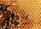 柠檬和蜂蜜能一起喝吗 什么蜂蜜好 蜂蜜加醋的作用 香蕉蜂蜜减肥 生姜蜂蜜