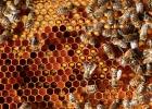 蜂蜜陈醋痛风 500g蜂蜜 什么时间喝蜂蜜好 蜂蜜加芝麻油 三叶草蜂蜜的作用