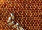 怎么看蜂蜜纯不纯 蜂蜜的季节 超市蜂蜜是真的吗 蜂蜜腌柠檬的味道 淘宝蜂蜜包装