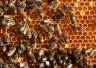 孕妇蜂蜜 两个月宝宝可以喝蜂蜜吗 蓬溪驸骅蜂蜜 蜂蜜功效 半液体蜂蜜