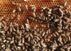 血糖高能吃蜂蜜 女性喝蜂蜜的好处 茉莉花苞蜂蜜 橄榄浸蜂蜜 蜂蜜水减肥