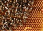 白醋和蜂蜜 蜂蜜海藻面膜功效 牛奶蜂蜜 蜜蜂养殖技术视频全集 蜂蜜养胃吗