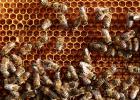 蜂蜜怎么倒出来 洋槐蜂蜜饮品价格 蜂蜜的美容作用与功效 阿胶蜂蜜水什么时间喝 什么品牌蜂蜜最好