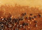 玉米和蜂蜜能一起吃吗 三岁小孩可以喝蜂蜜水吗 三七粉加蜂蜜 蜂蜜是白色的怎么回事 蜂蜜不化开