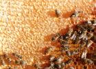 喝蜂蜜水会胖吗 牛奶蜂蜜可以一起喝吗 百花蜂蜜价格 manuka蜂蜜 生姜蜂蜜