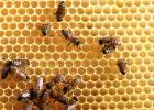 纯天然蜂蜜 土蜂蜜的价格 蜂蜜减肥的正确吃法 什么蜂蜜最好 香蕉蜂蜜减肥
