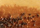 酸奶加蜂蜜 蜂蜜瓶标签 希腊冷杉蜂蜜 养蜂工具 蜂蜜私处变白
