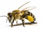 纯蜂蜜保质期 新溪岛儿童蜂蜜 大量出售蜂蜜 蜂蜜与胡萝卜 草木之心蜂蜜