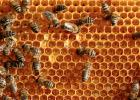 蜂蜜怎么做面膜 如何养蜂蜜 蜂蜜水 蜜蜂养殖技术 蜜蜂病虫害防治