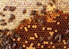 蜂蜜加醋的作用 蜂蜜敷脸 哪种蜂蜜最好 养蜜蜂技术视频 柠檬蜂蜜水