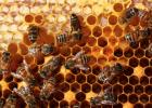 蜂蜜治疗便秘 蜂蜜食用 蜜蜂堂 香蕉蜂蜜面膜 土蜂蜜的价格