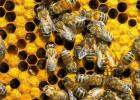 土蜂蜜的价格 如何养蜜蜂 中华蜜蜂 什么蜂蜜最好 蜂蜜怎样祛斑