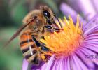 蜂蜜怎样做面膜 蜂蜜水减肥法 蜂蜜加醋的作用 蜂蜜 蜂蜜能减肥吗