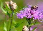 蜂蜜洗脸的正确方法 蛋清蜂蜜面膜的功效 蜂蜜配生姜的作用 蜂蜜治咽炎 蜂蜜什么时候喝好