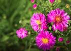 夏天喝蜂蜜的好处 紫薯蜂蜜菜 凌檬蜂蜜水可以祛痘嘛 蜂之巢蜂蜜 蜂蜜与枸杞