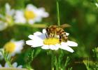 牛奶 蜂蜜 蜂蜜柚子茶批发 酸奶加蜂蜜 视频养蜜蜂 怎样养好蜜蜂