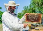 蜂蜜价格表 海南蜜蜂养殖 牛奶蜂蜜可以一起喝吗 蜂蜜怎么吃最好 椴树蜂蜜的价格