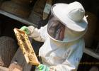 珍珠粉加蜂蜜 肝火旺可以喝蜂蜜吗 早上喝蜂蜜水好吗 芒果加蜂蜜 黄玻璃蜂蜜敷脸
