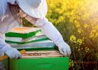 蜂蜜治口腔溃疡 蜂蜜可以空腹喝 蜂蜜段子 油菜蜂蜜批发 蜂蜜黄油杏仁哪有买吗