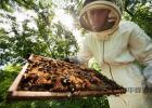 怎么判别真假蜂蜜 蜂蜜蜂王浆蜂胶的区别 芦荟蜂蜜 喝蜂蜜会早发育吗 蜂蜜老梅干1 4